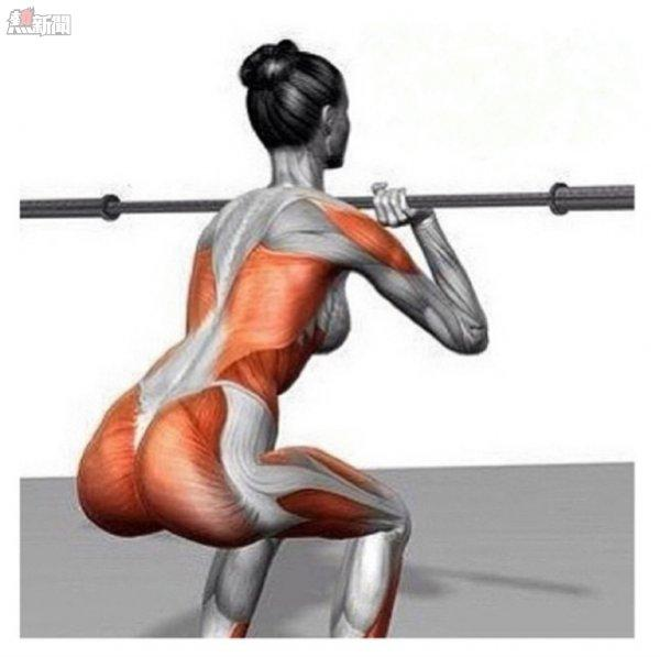 (圖1)橙色部位為深蹲時所參與的肌肉
