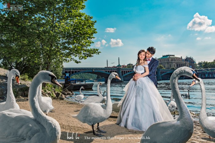 與一群天鵝一起拍攝,更令人有童畫小說的情侶感覺. A fairytale prewedding photo