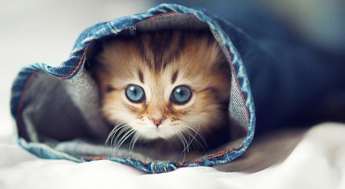 選討厭的貓咪,看你的自卑感