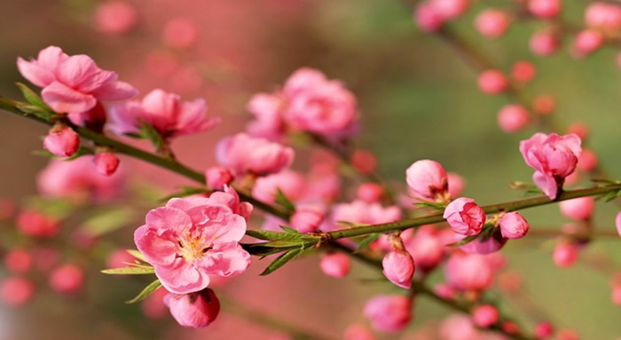 你能夠吸引「富貴桃花」嗎?